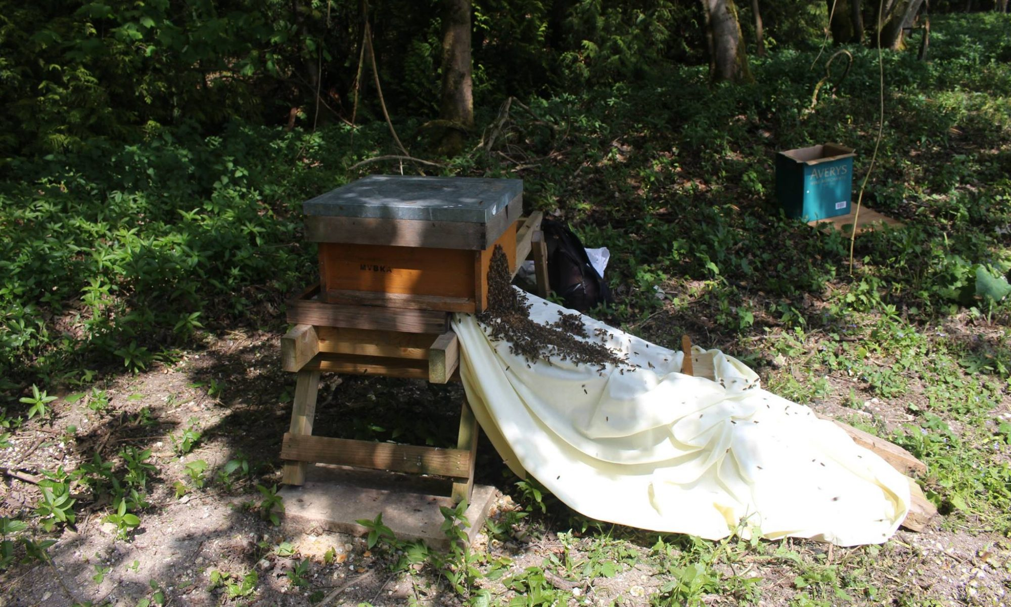 Meon Valley Beekeepers